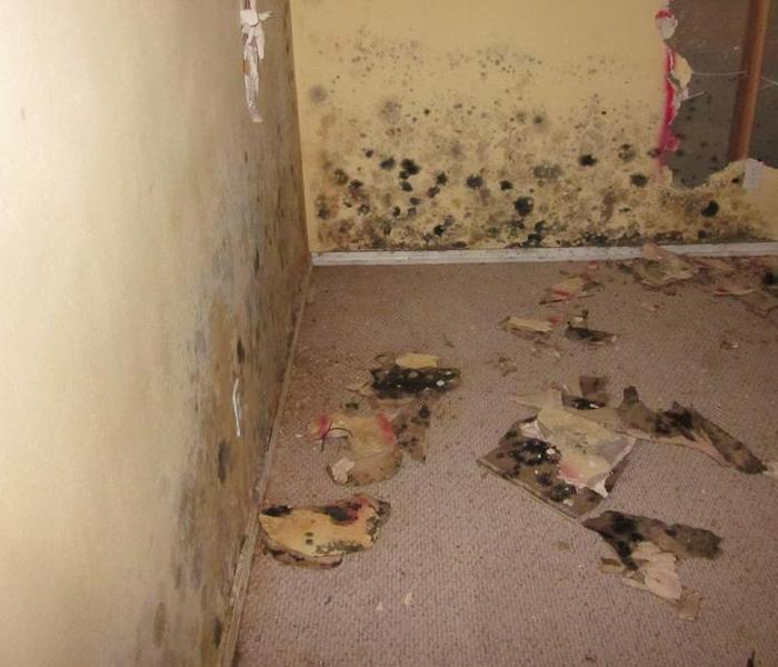 Household Mold Removal – Bay City  Before